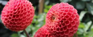 School visits to Birmingham Botanical Gardens