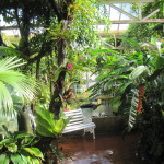 Tropical Glasshouse
