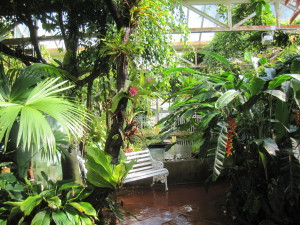 The glasshouses at Birmingham Botanical Gardens