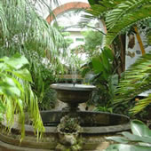 Sub-tropical Glasshouse
