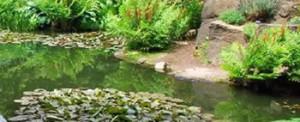 Rock Garden Pool