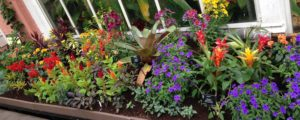 October Plants of the Month