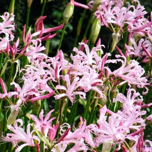 Plants of the Month October