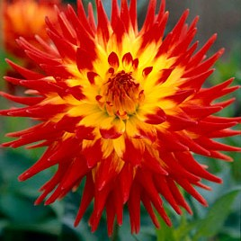 Plants of the Month September