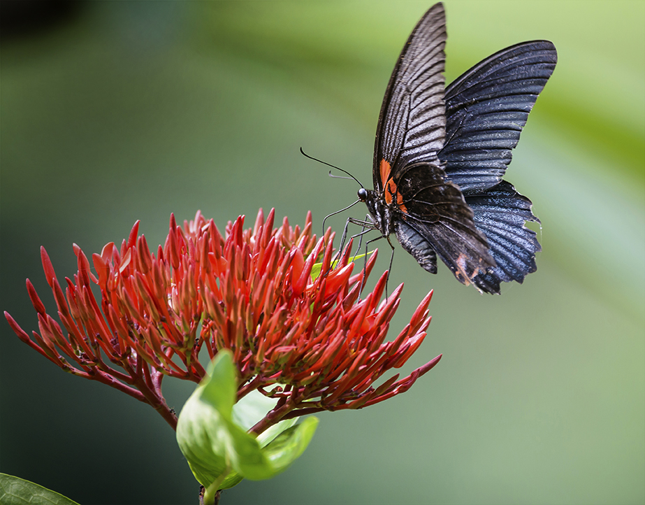 Butterfly House Re-Opens 2018
