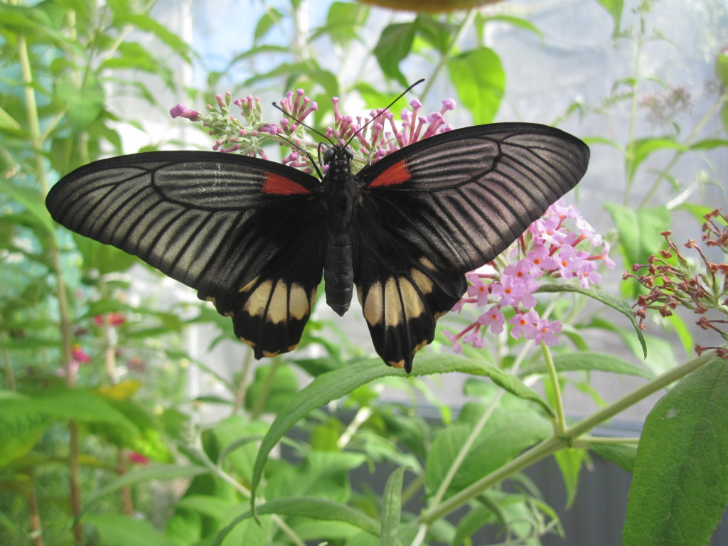 Butterfly House at Birmingham Botanical Gardens
