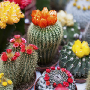 Cactus Show 6th October 2019 - Birmingham Botanical Gardens
