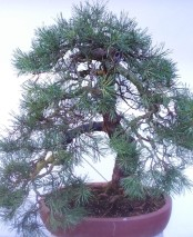 Bonsai Boot Sale - 15th March 2020