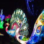 magical lantern festival Botanical Gardens