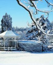 Christmas-Gardeners-Blog