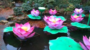 Lotus 'Extravaganza' | Plants of the Month December