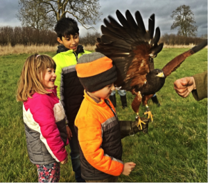 Falconry Day 31st July 2019