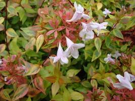 January Gardens Blog