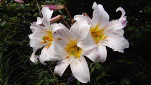 Seasonal Gardening Tips for March