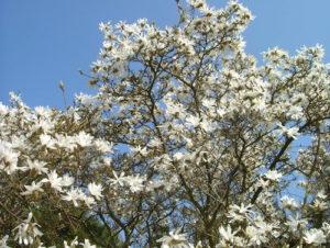 Gardeners' Blog - April 2018