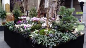 Worth our weight in gold - RHS Early Spring Show round-up