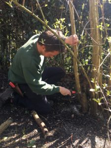 How to Prune Shrubs The Right Way