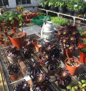 How To Plant Plug Plants