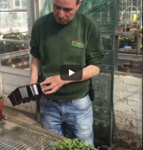 Prick Out Your Seedlings Tips