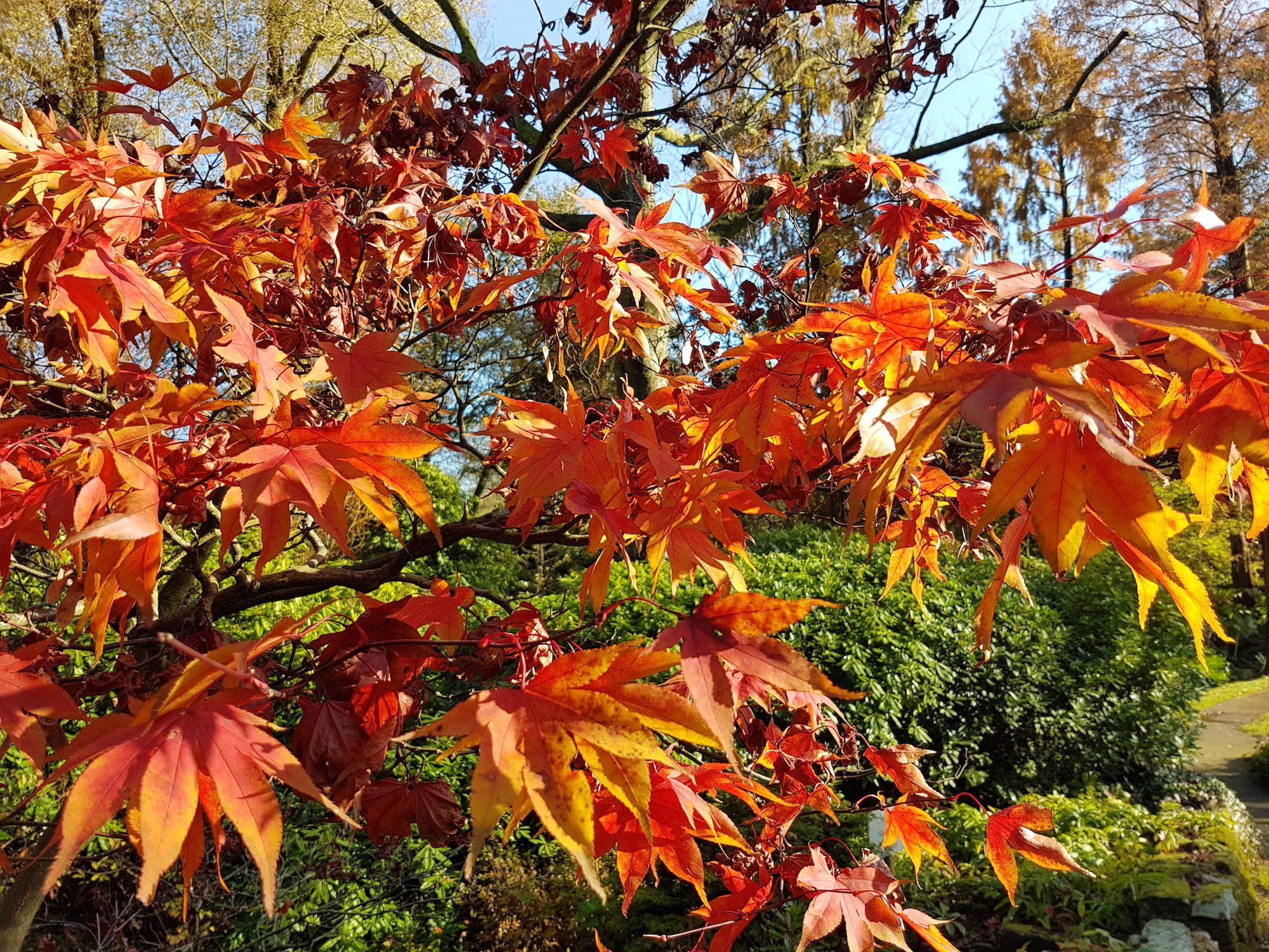 November Gardeners' Blog 2018