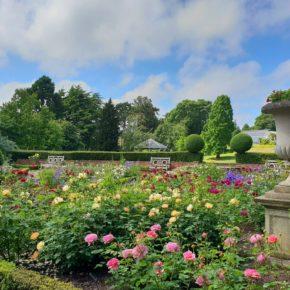 Re-opening Birmingham Botanical Gardens